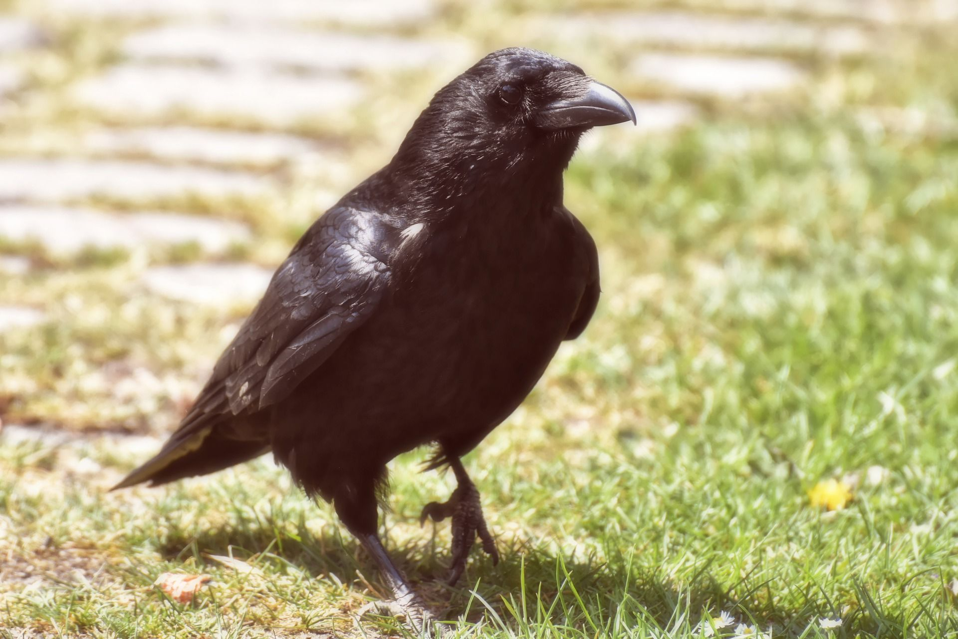 Лучшие фотографии ворона у нас
