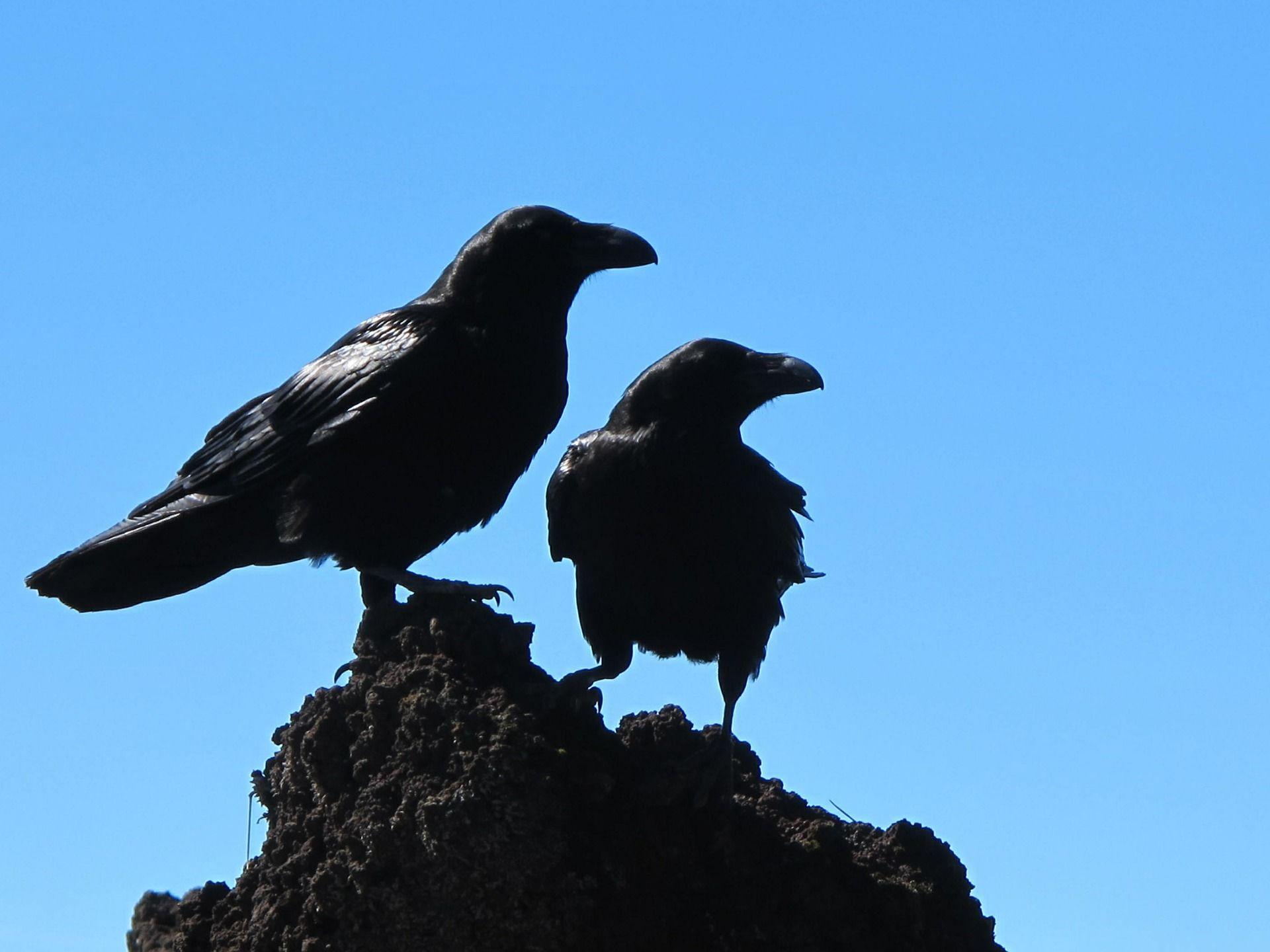 Смотреть черных ворон онлайн