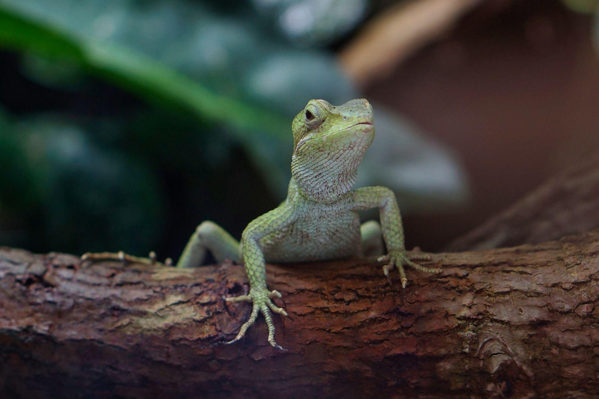 Лучшие фото геккона