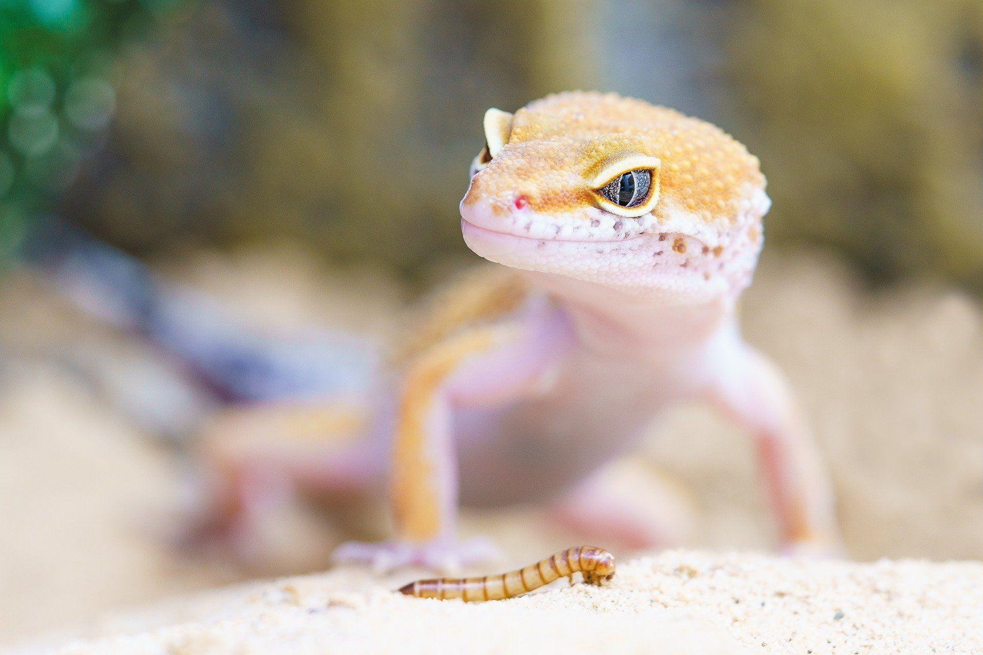 Купить фото с гекконом? Скачивайте бесплатно