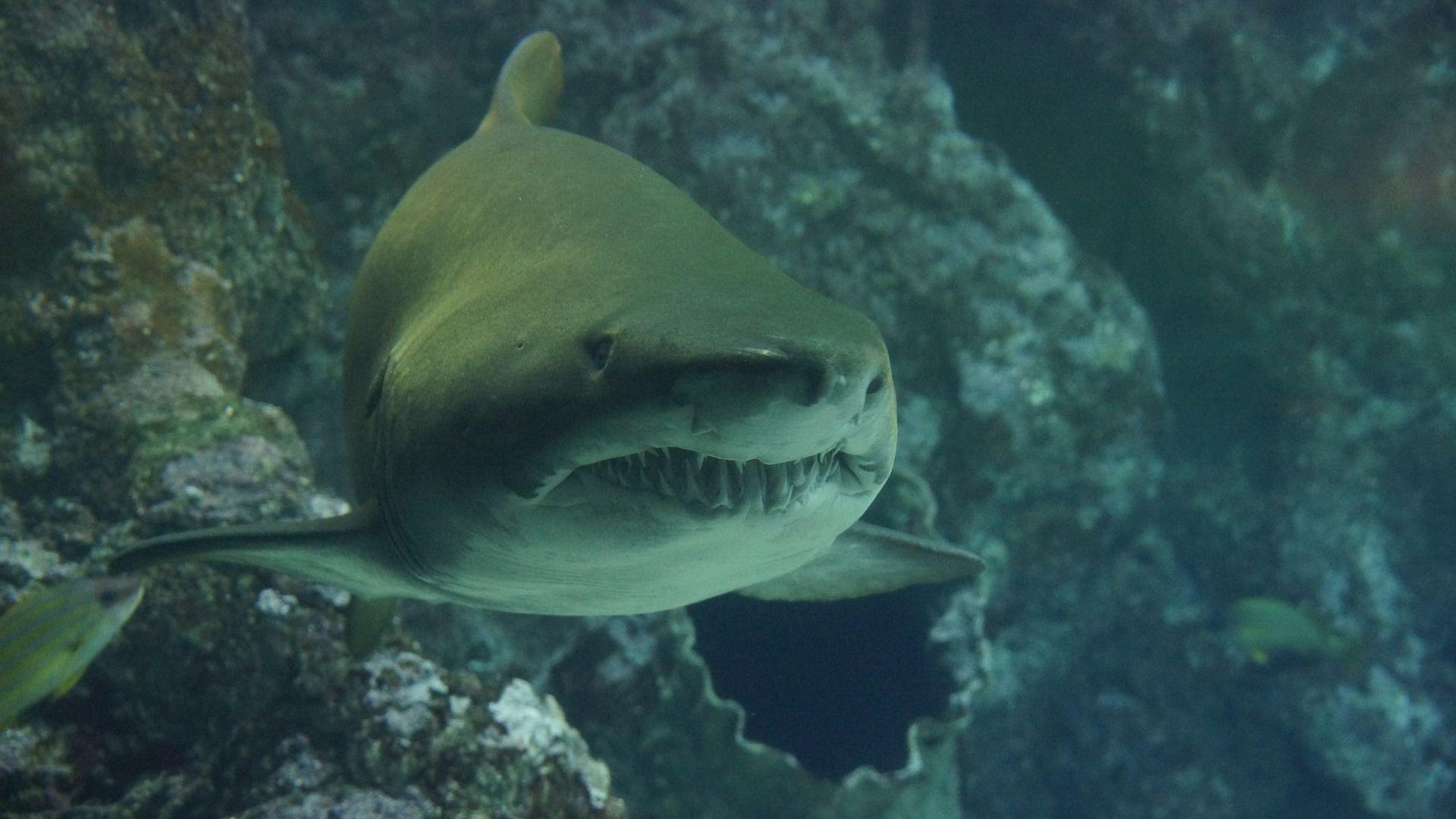 Красивые фото акул в большом разрешении