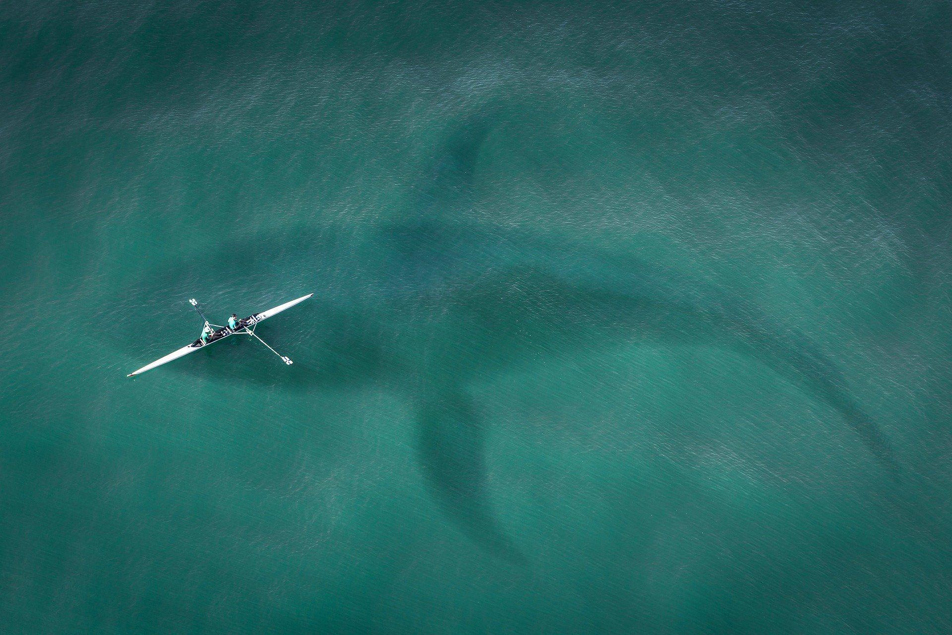 Смотреть фото гигантской акулы бесплатно