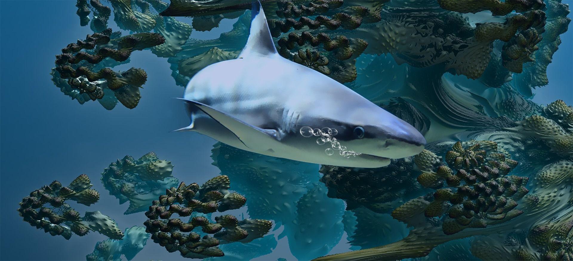 Фото гигантской акулы в хорошем качестве