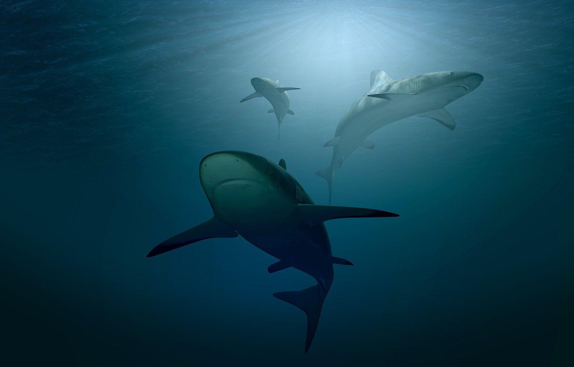 Смотреть гигантских акул онлайн