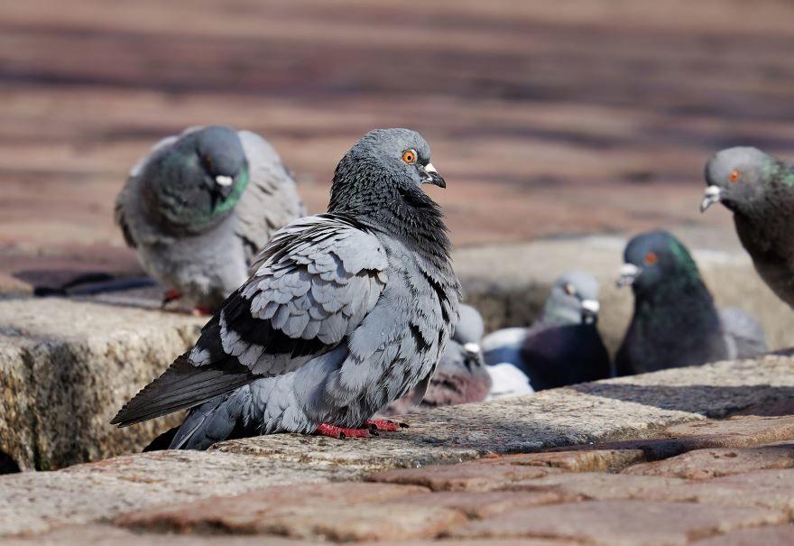 Смотреть фото голубей