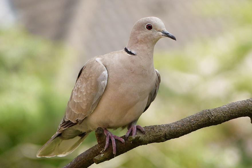 Скачать фото красивых голубей