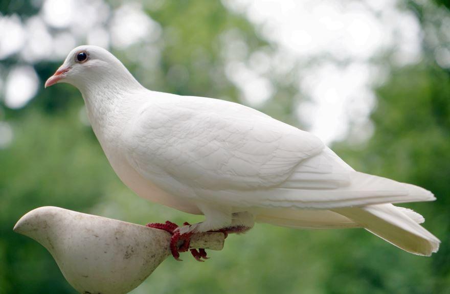 Бесплатные фото голубей