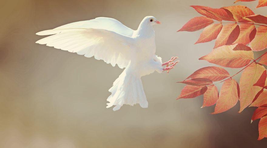 Купить фото с белым голубем? Скачайте бесплатно
