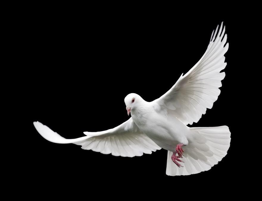 Скачать фото белых голубей