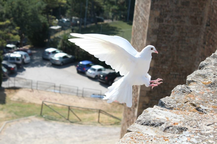 Смотреть фото белых голубей онлайн