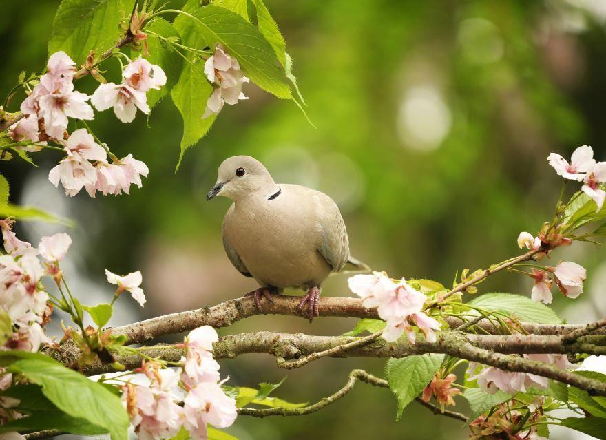 Красивая картинки белого голубя