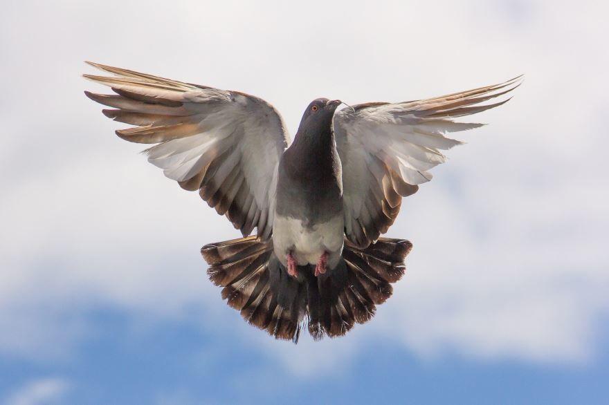 Лучшие фотографии белого голубя