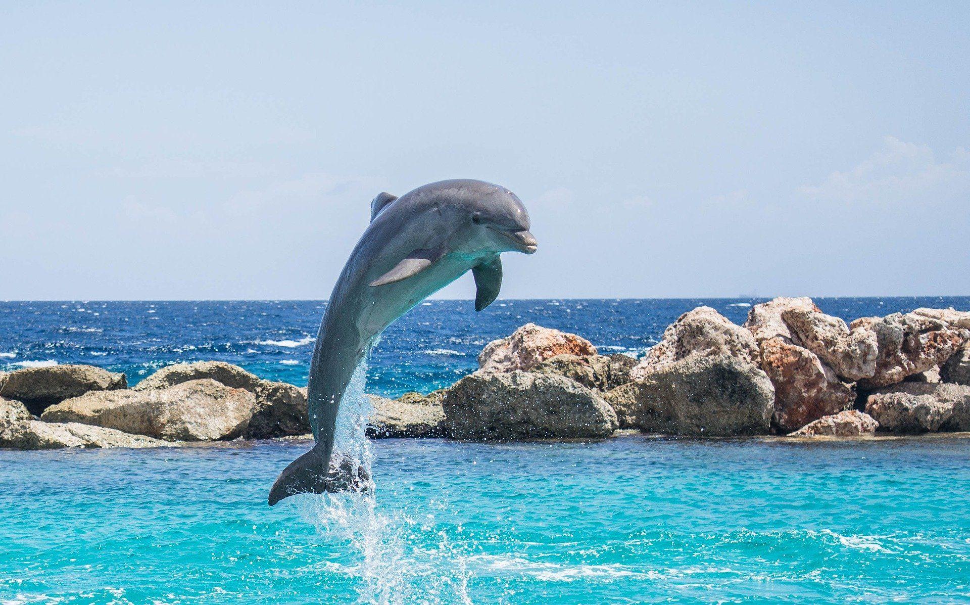 Скачать фото дельфина с нашего официального сайта