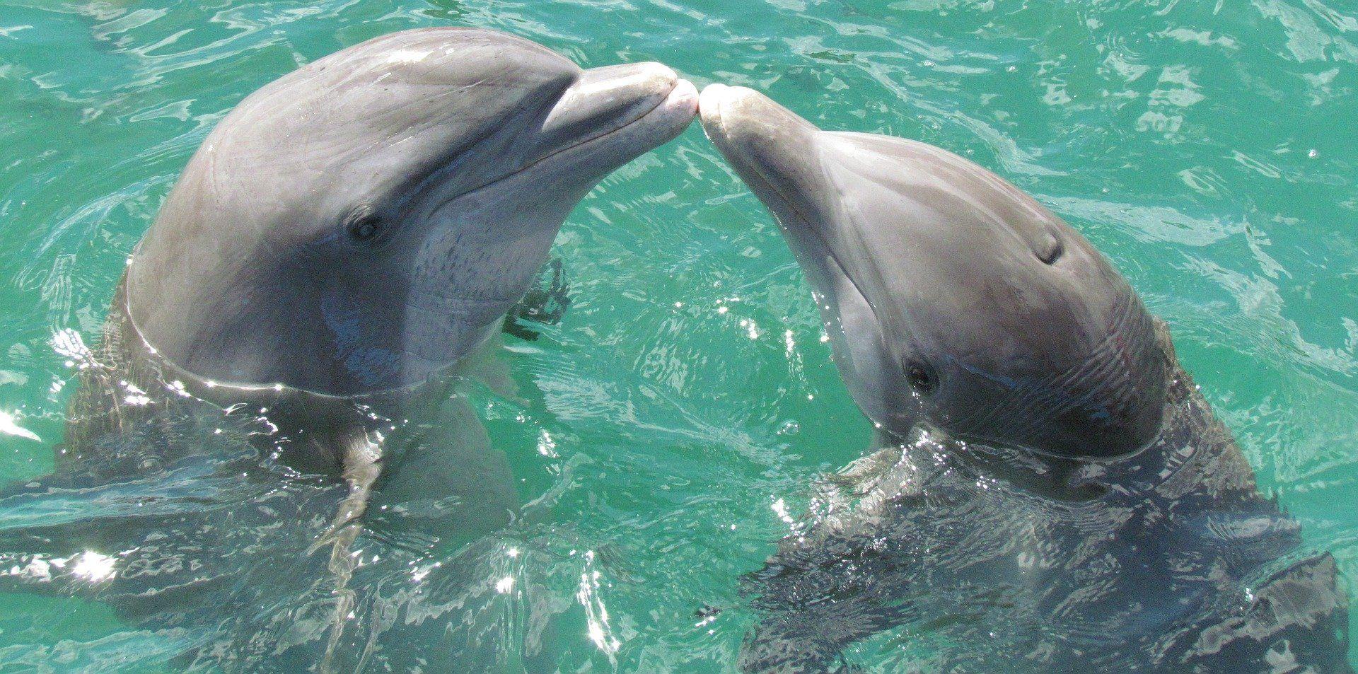 Скачать фото красивого дельфина