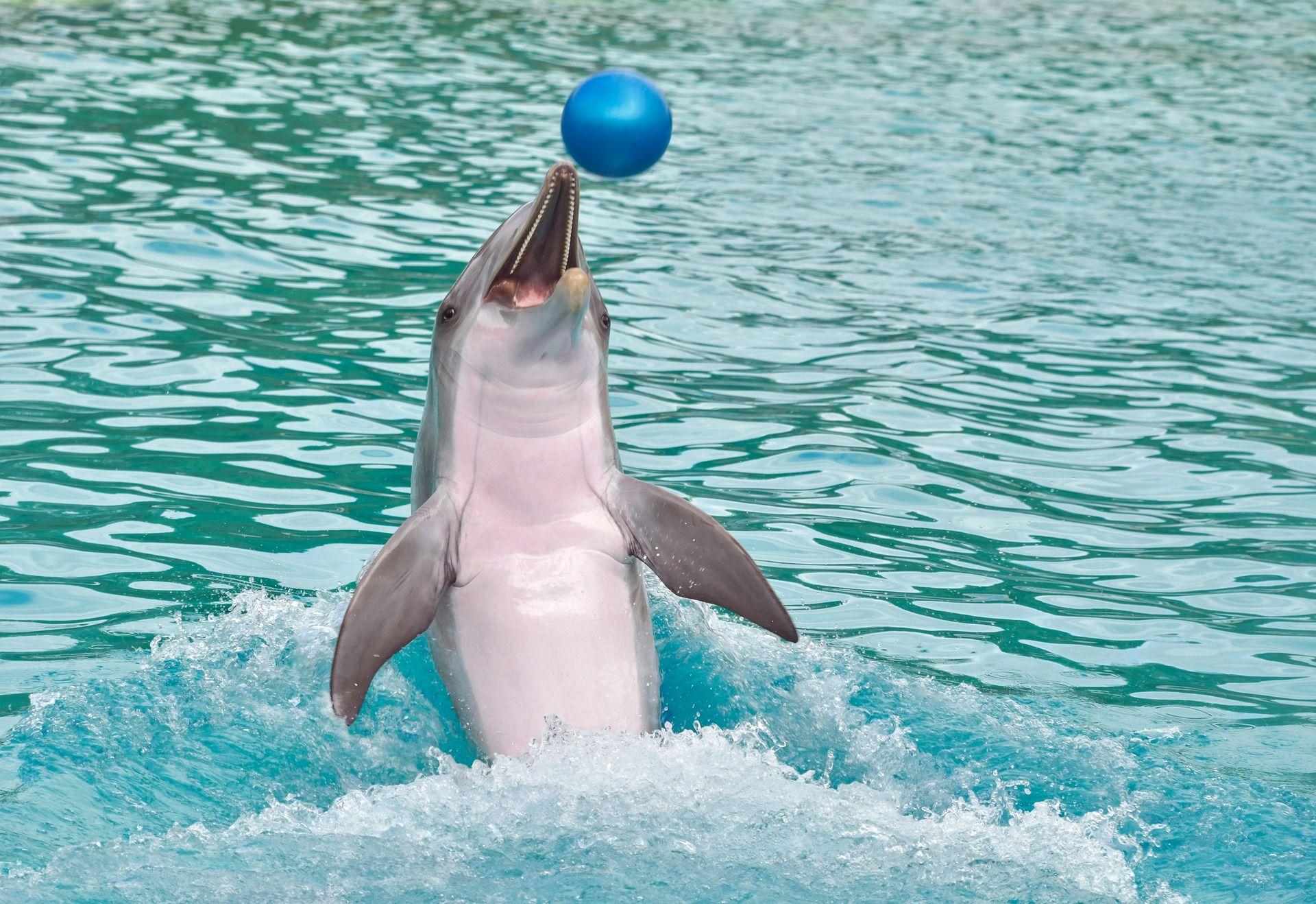 Купить фото дельфина? Скачать бесплатно