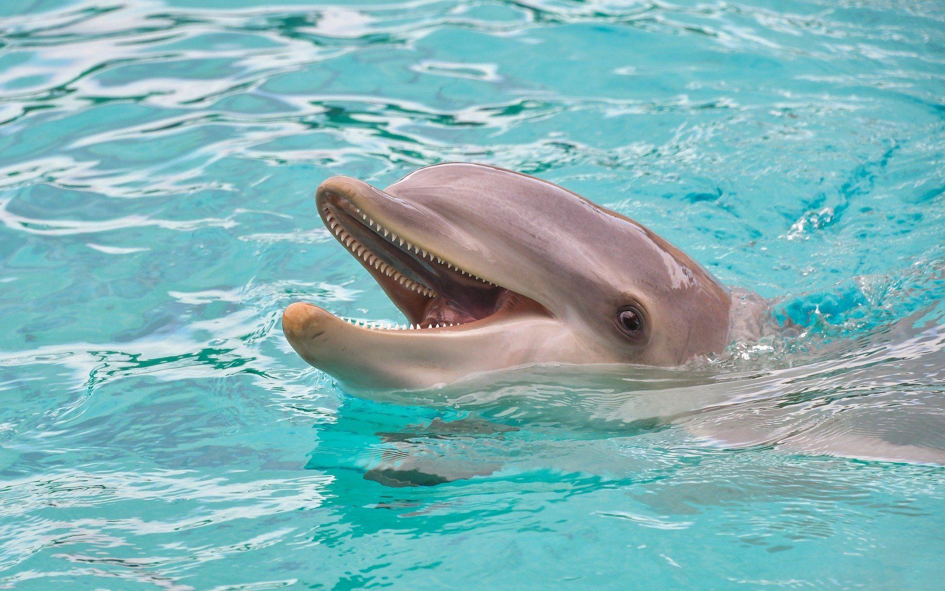 Смотреть Фото дельфина онлайн