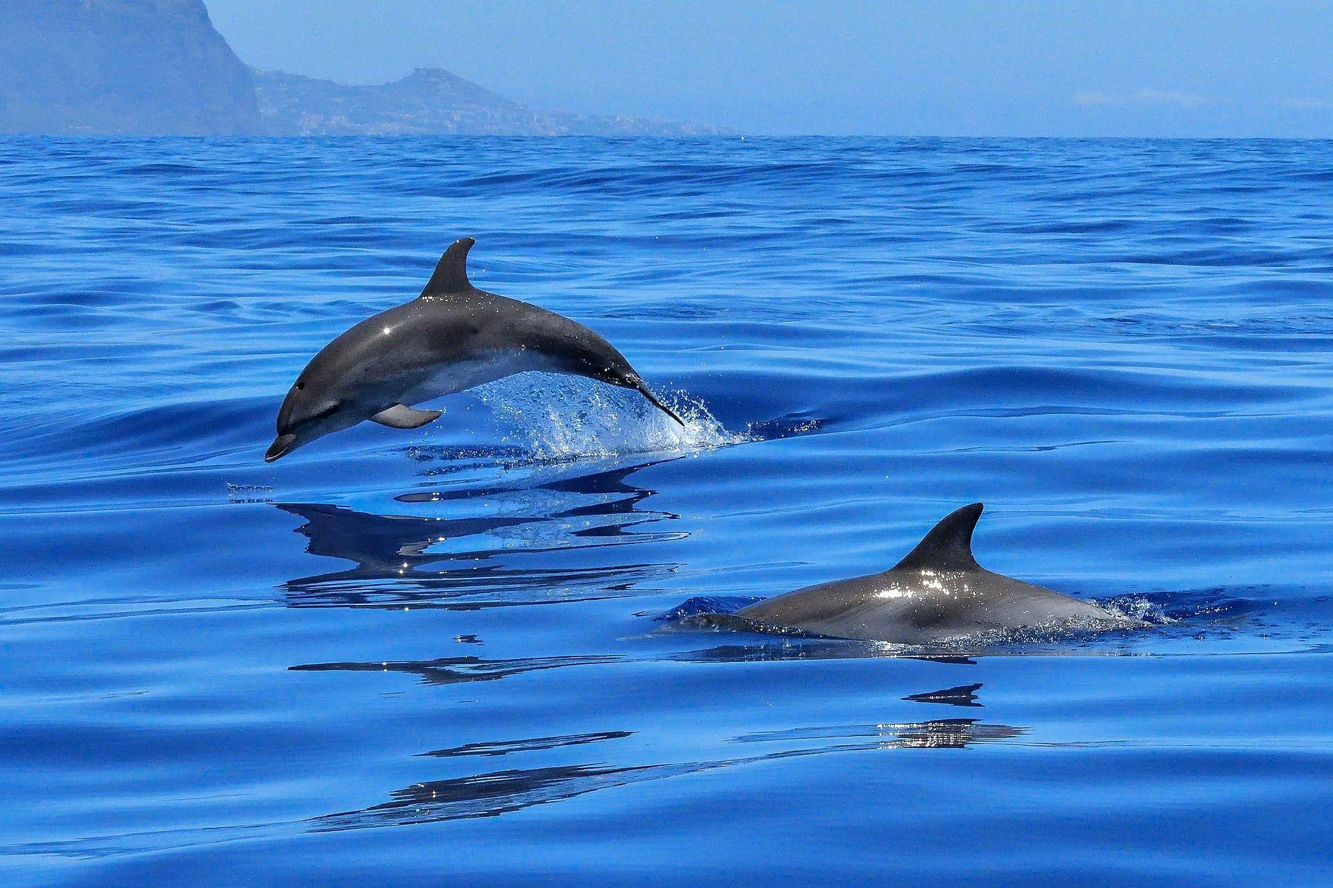Фото красивых дельфинов бесплатно