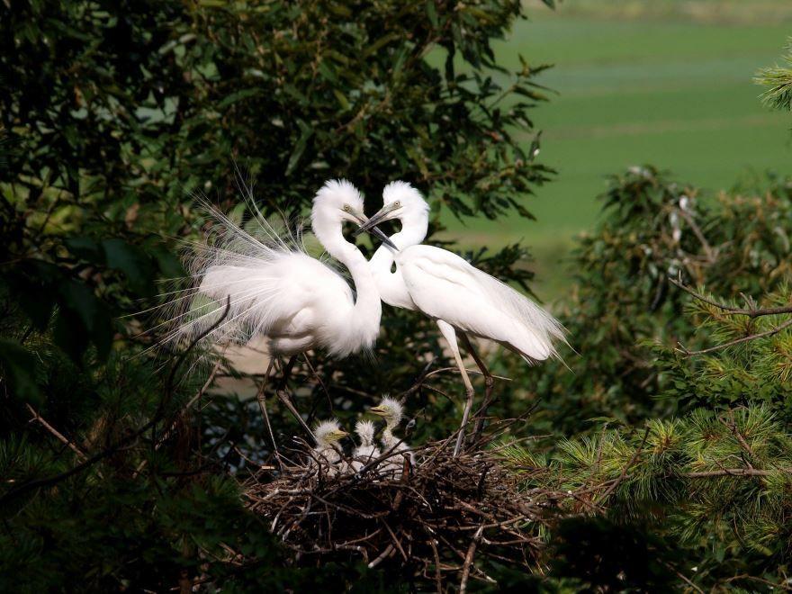 Смотреть красивое фото серой цапли на природе