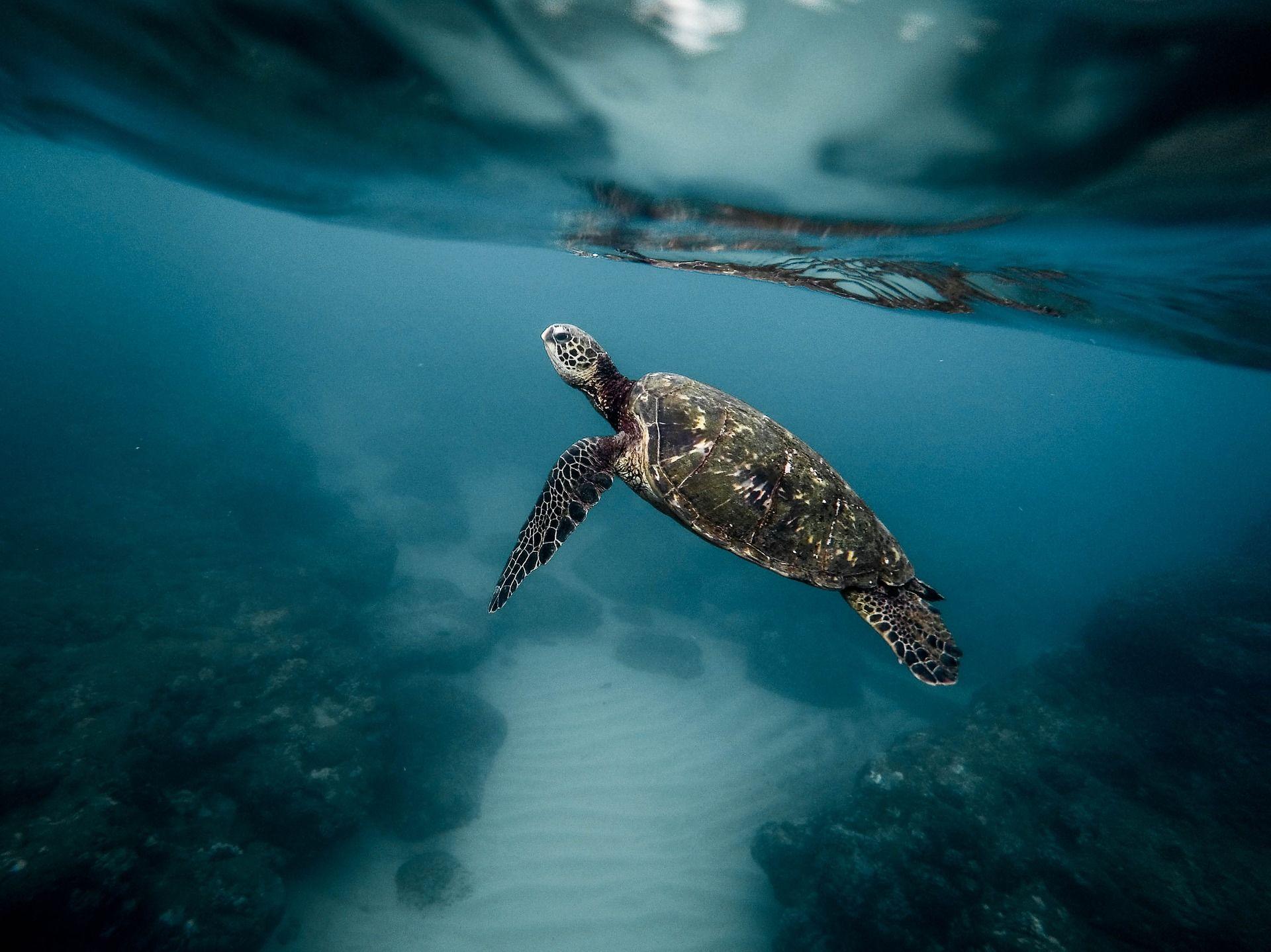 Скачать интересное фото черепахи на природе летом