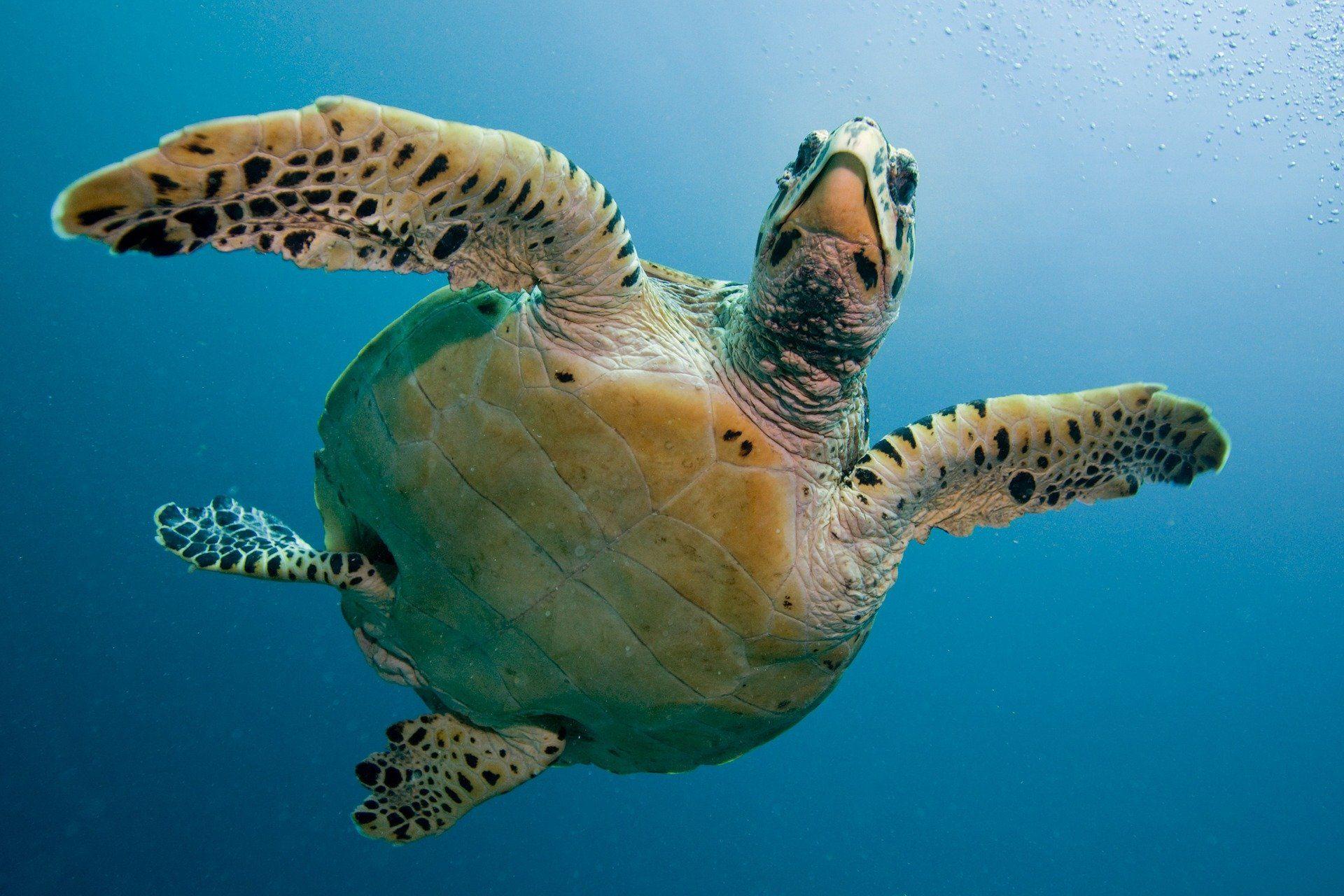 Смотреть лучшее фото черепахи бесплатно