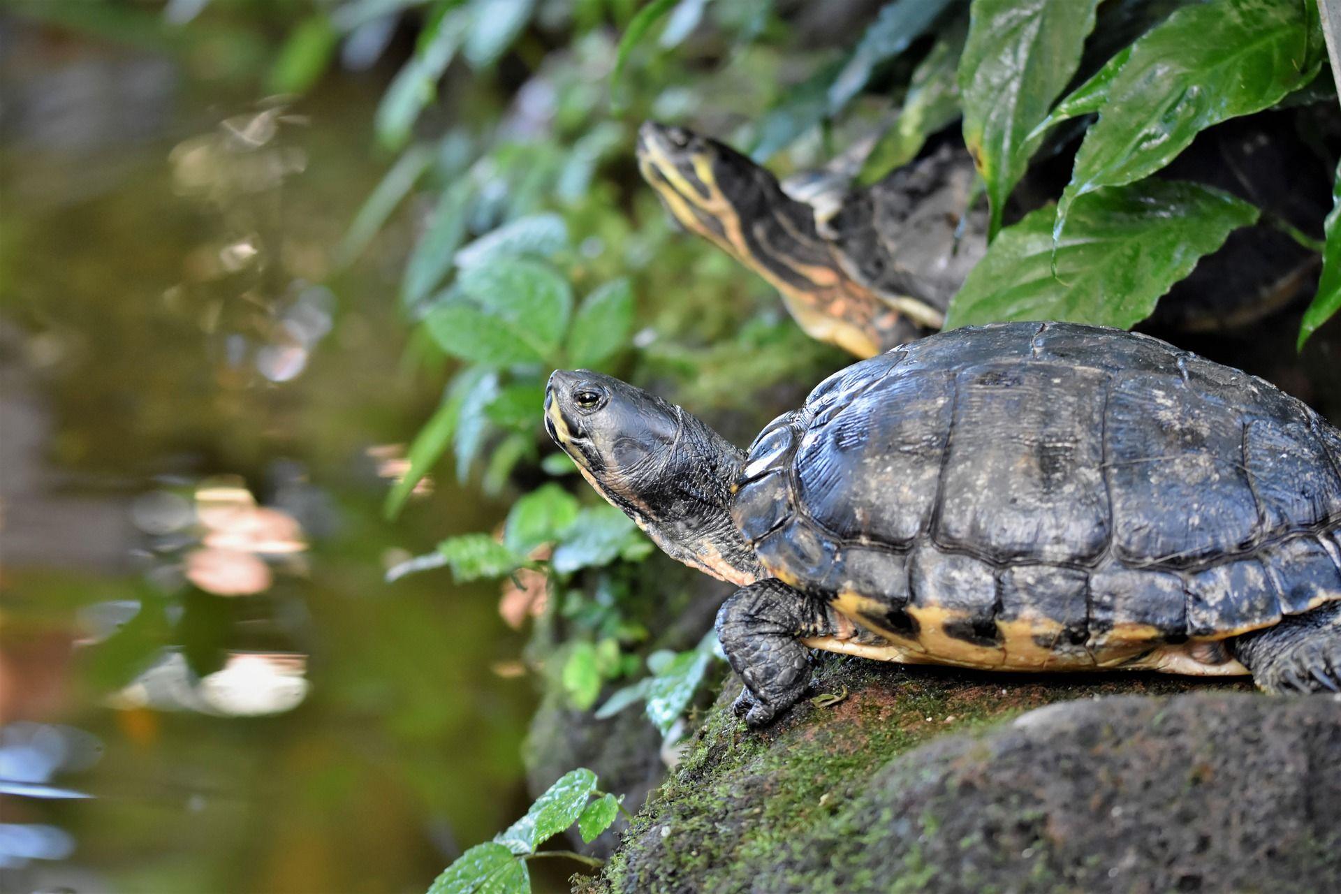 Скачать онлайн бесплатно фото большой красивой черепахи