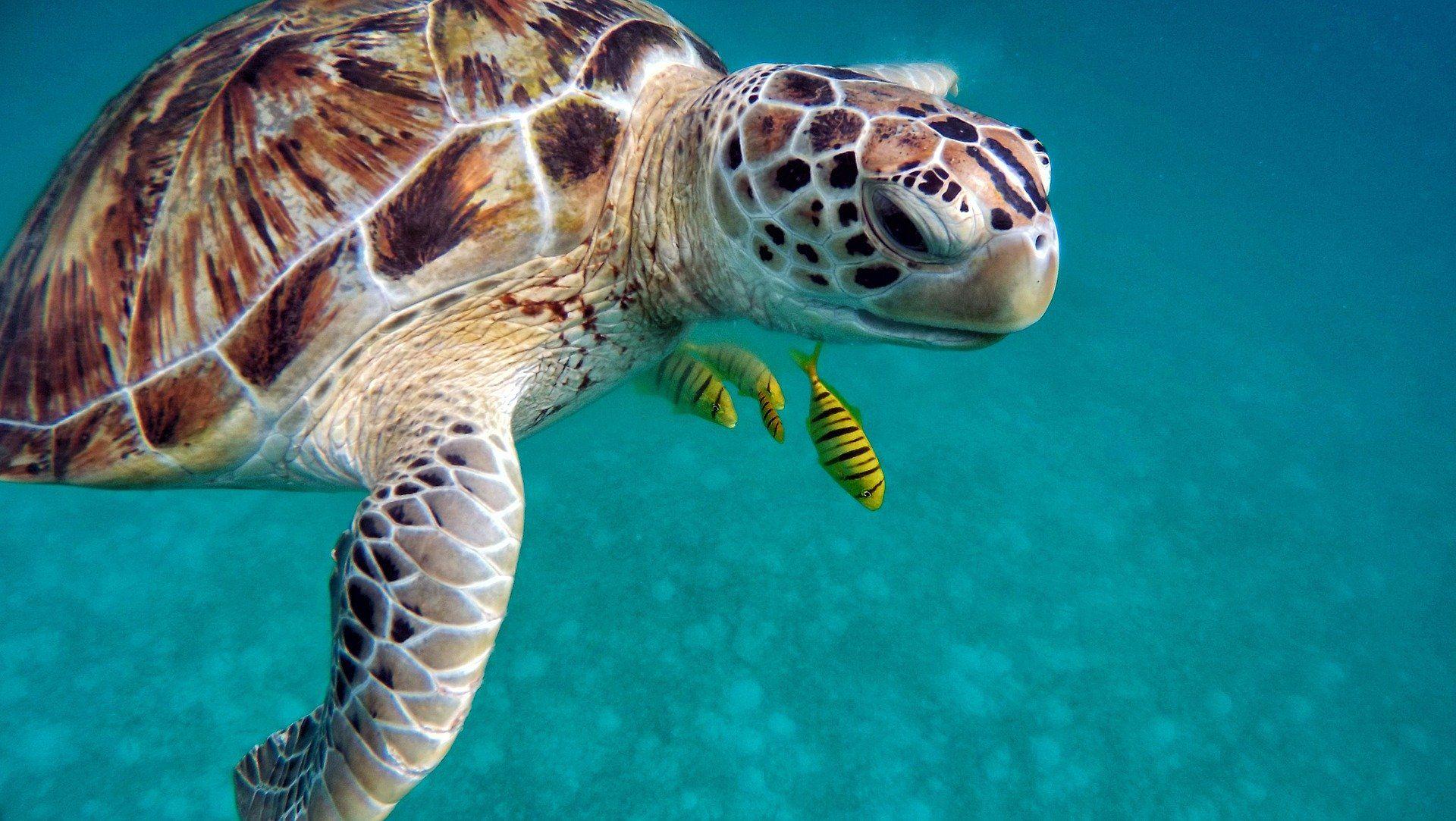 Смотреть красивые картинки черепахи на природе