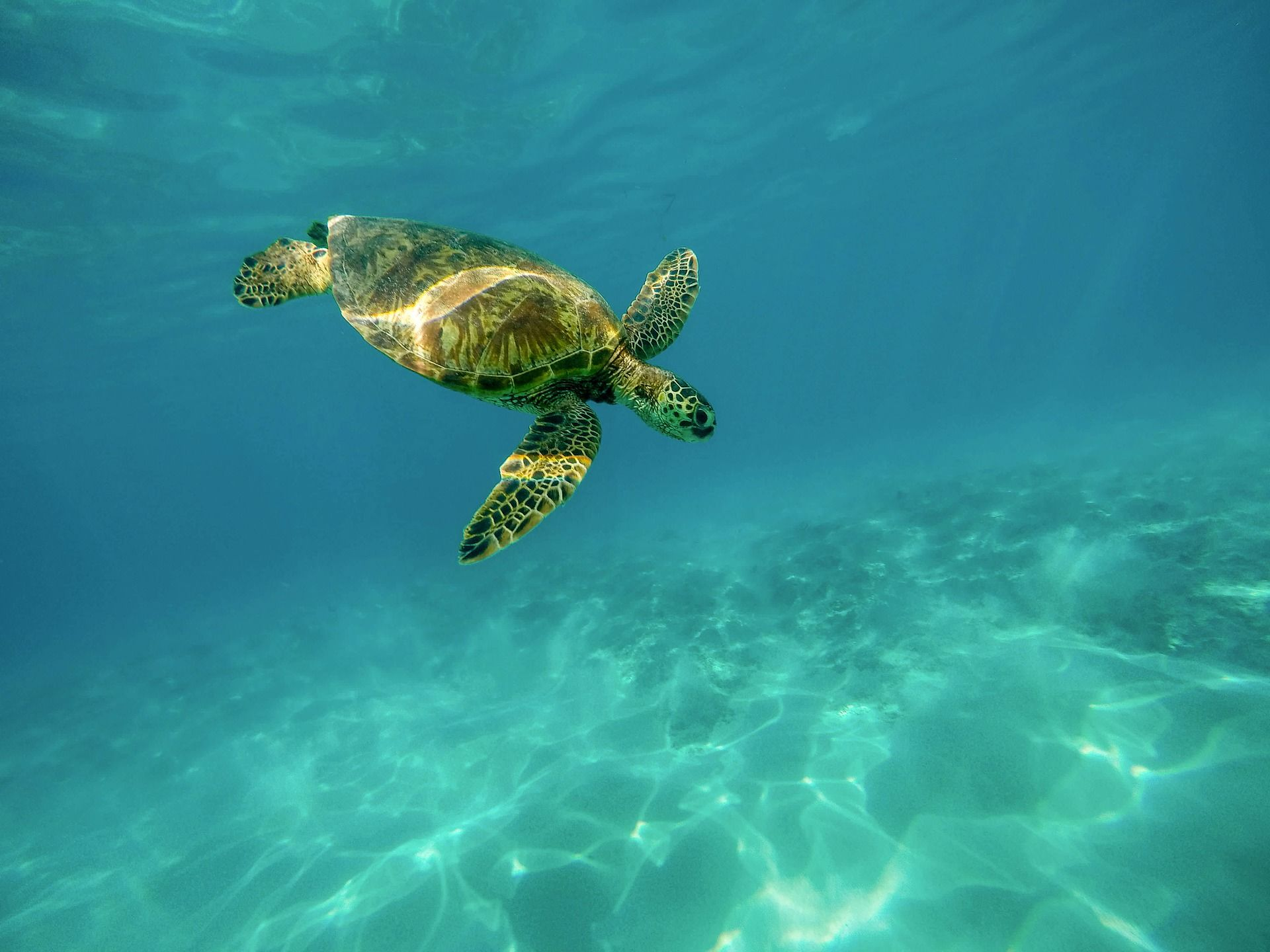 Смотреть лучшее фото черепаха на природе