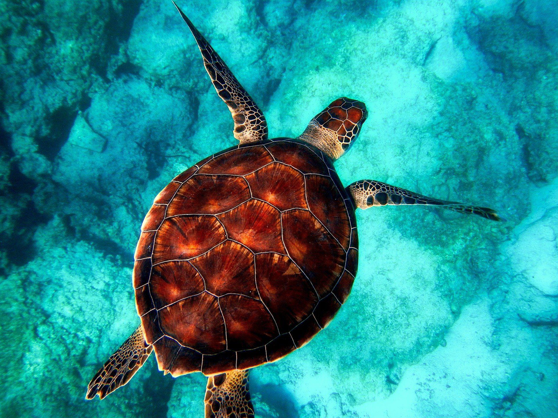Смотреть интересное фото трех черепах