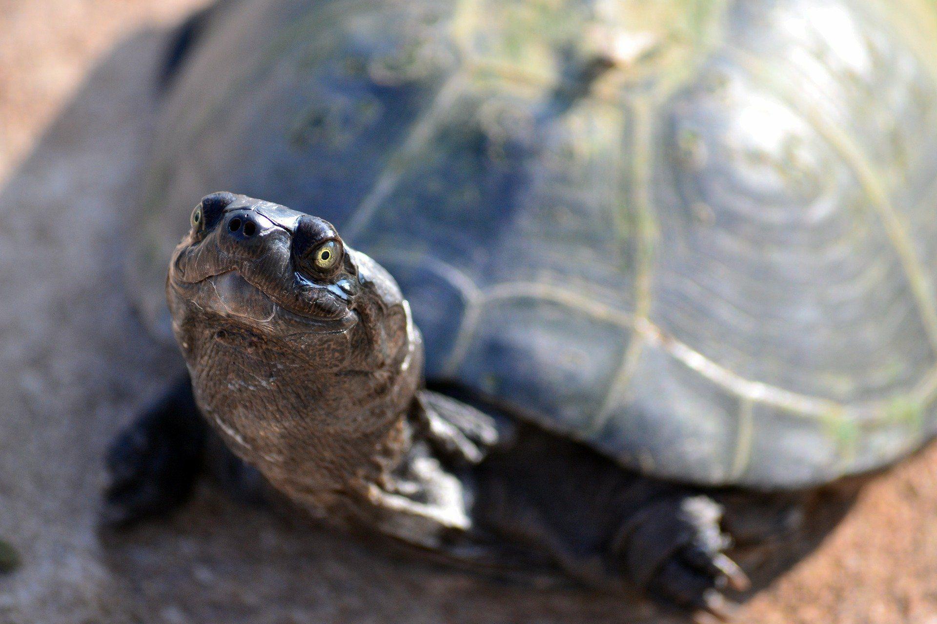 Скачать бесплатно картинку черепахи в хорошем качестве