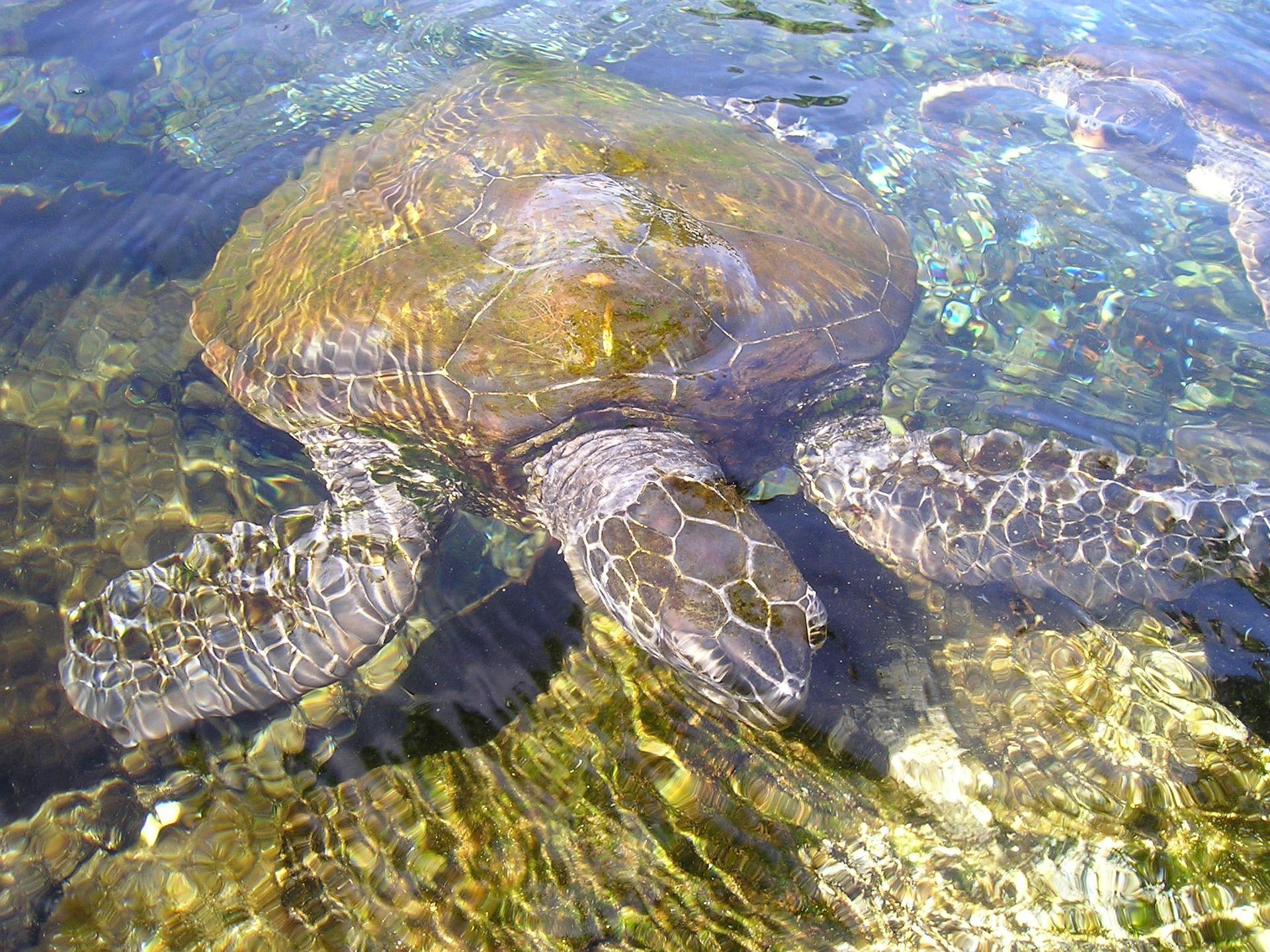 Смотреть красивую картинку черепахи крупным планом