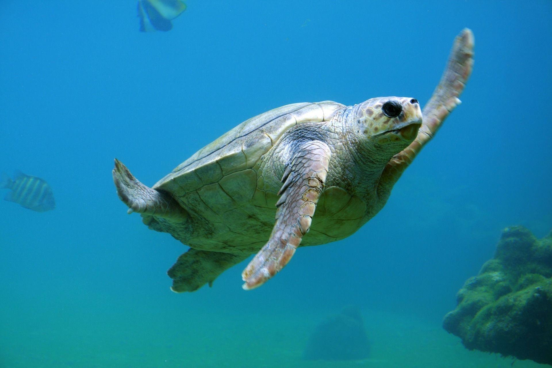 Красивое, необычное фото черепахи на природе