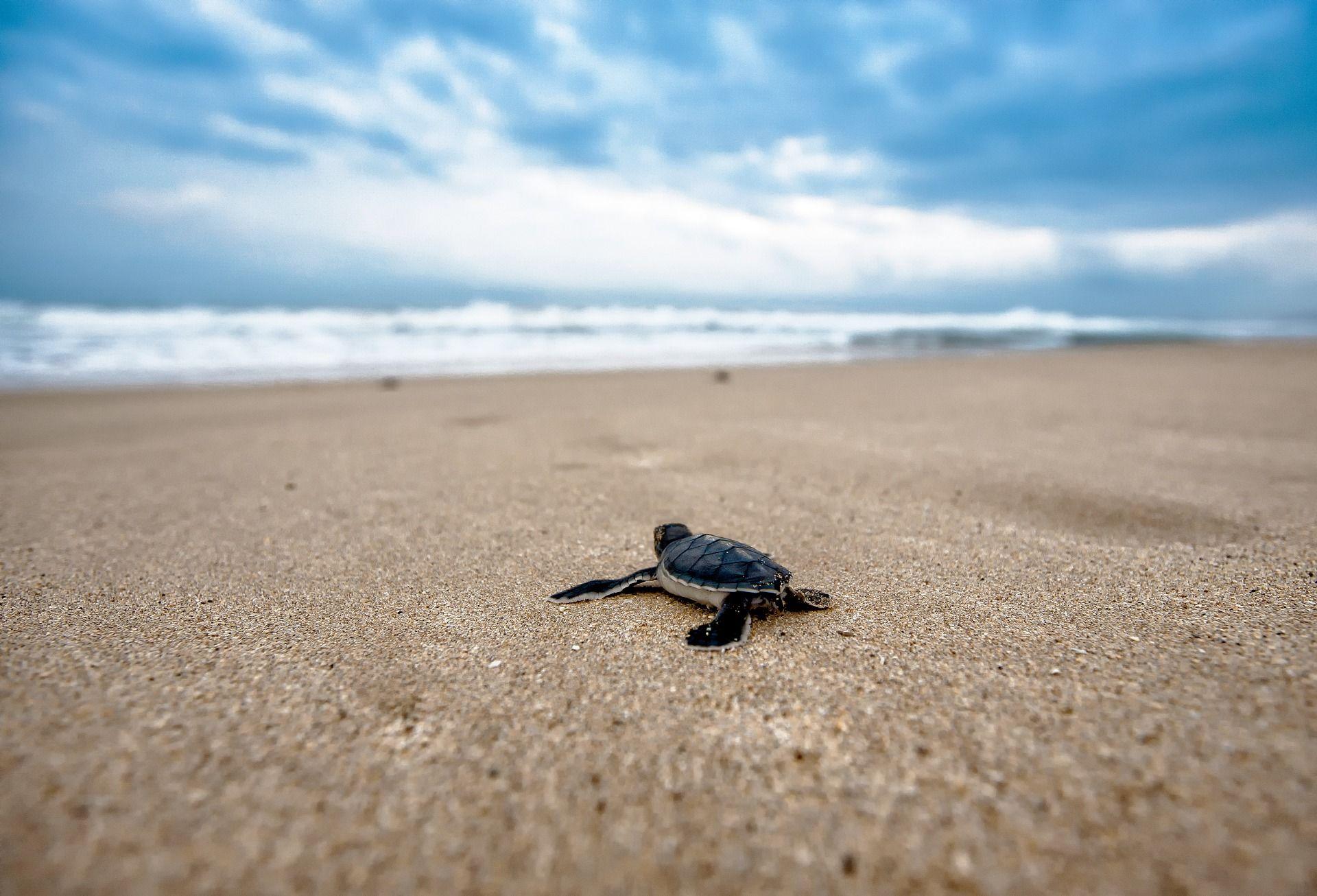 Красивое фото необычной черепахи