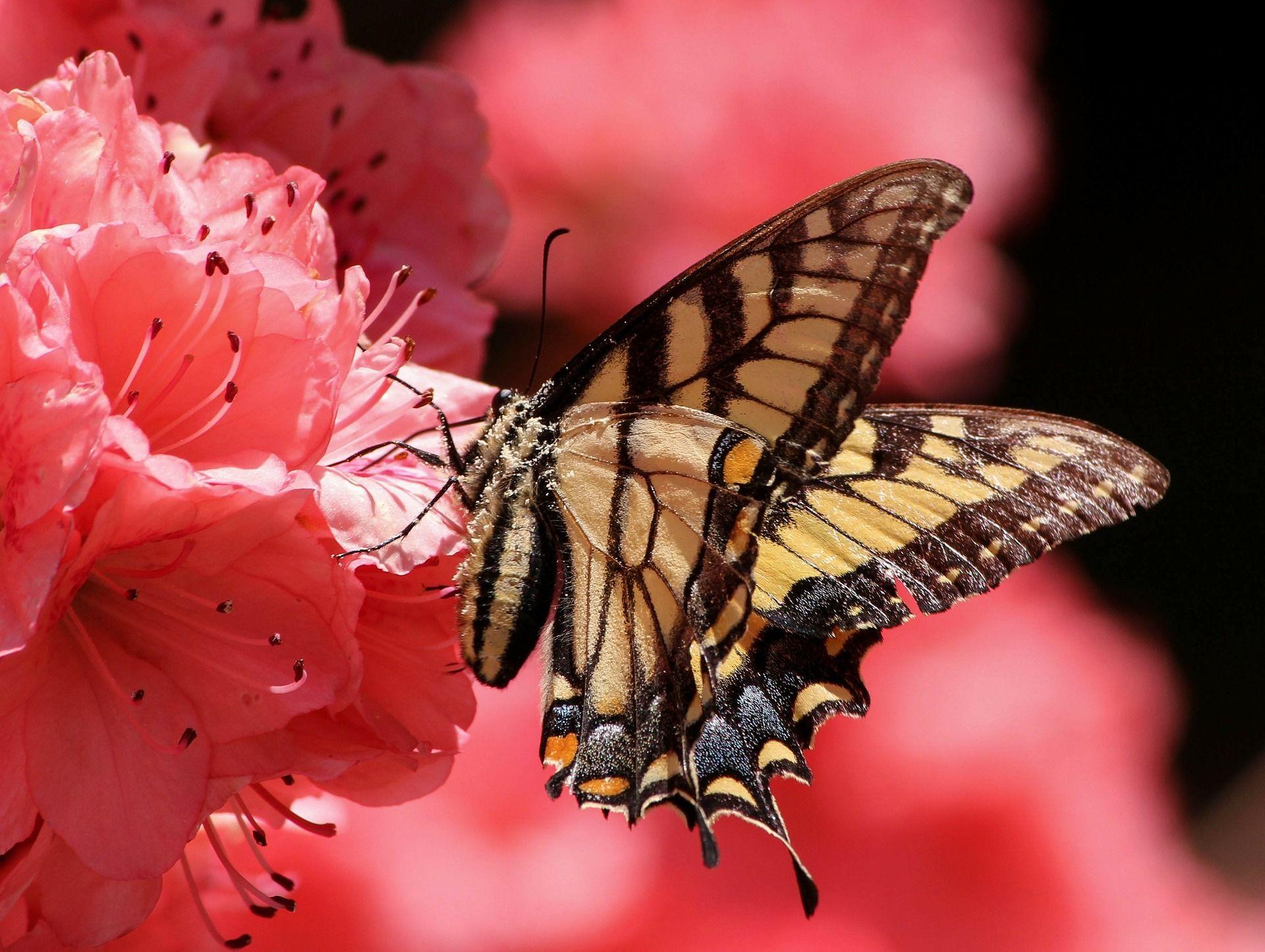 Смотреть фото бабочка онлайн