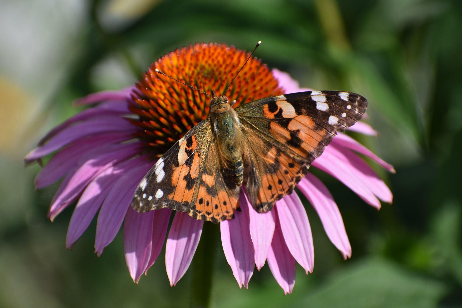 Красивые картинки бабочки онлайн