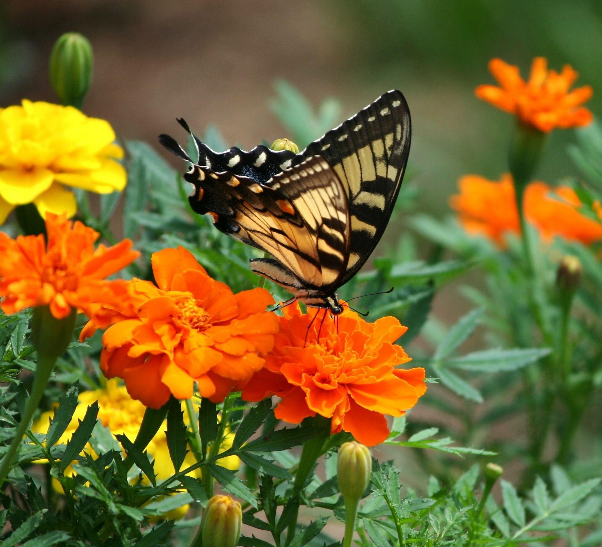 Бесплатные фото бабочки во весь экран