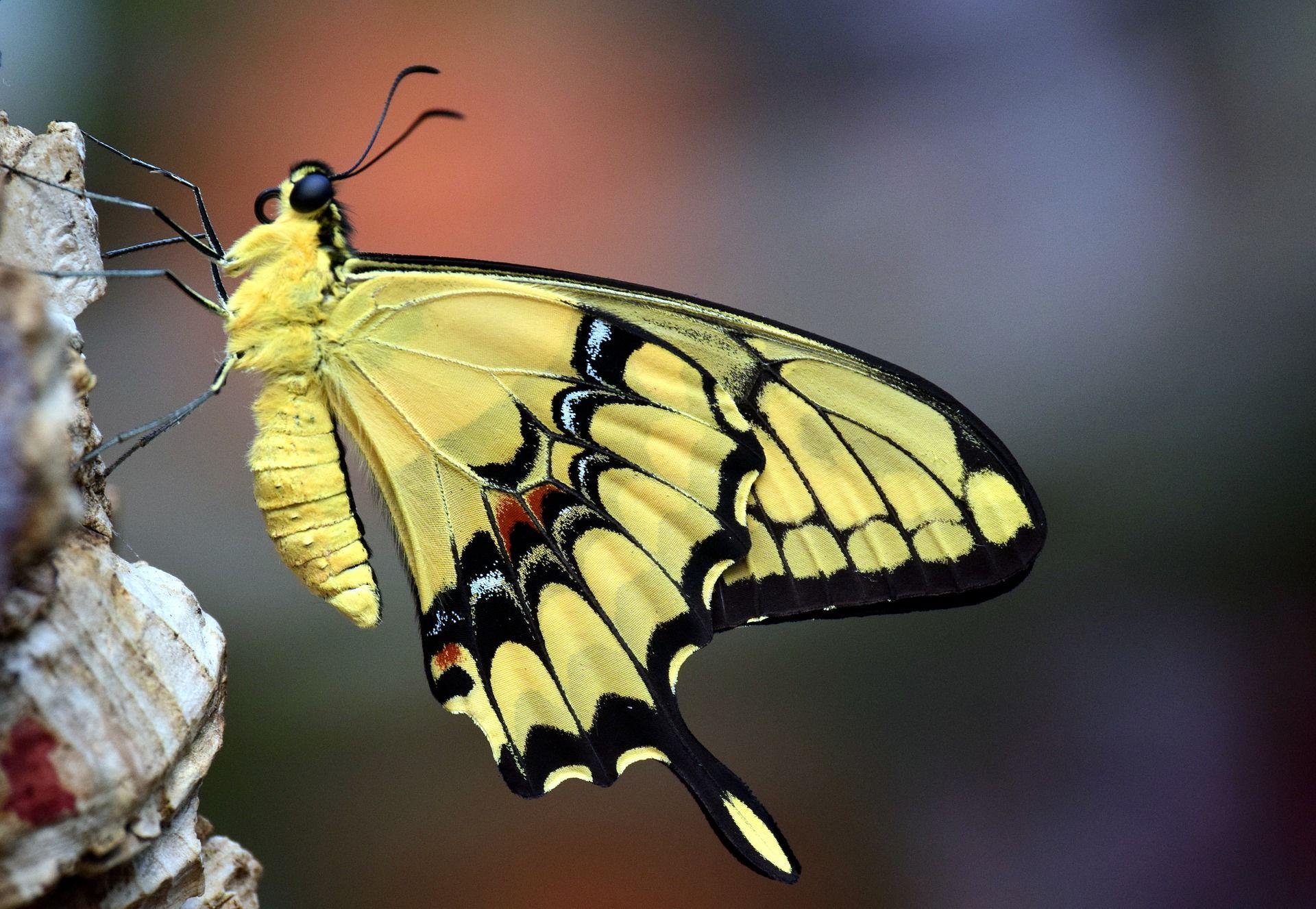 Фотография бабочка во весь экран