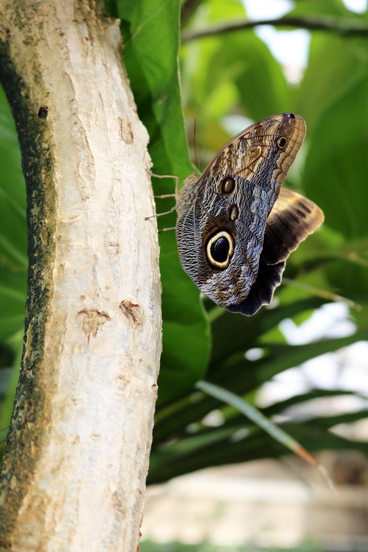 Фото черной бабочки в хорошем качестве