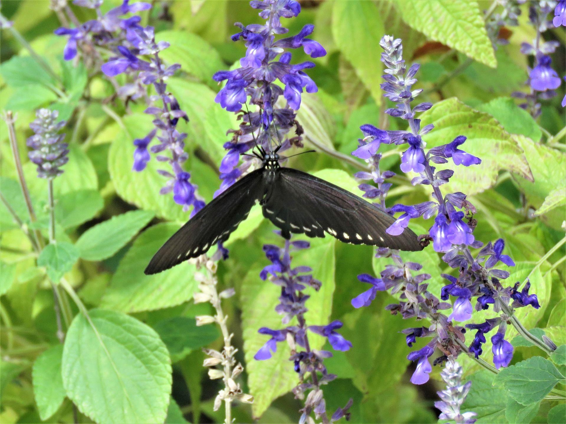 Скачать онлайн фото черно-красной бабочки