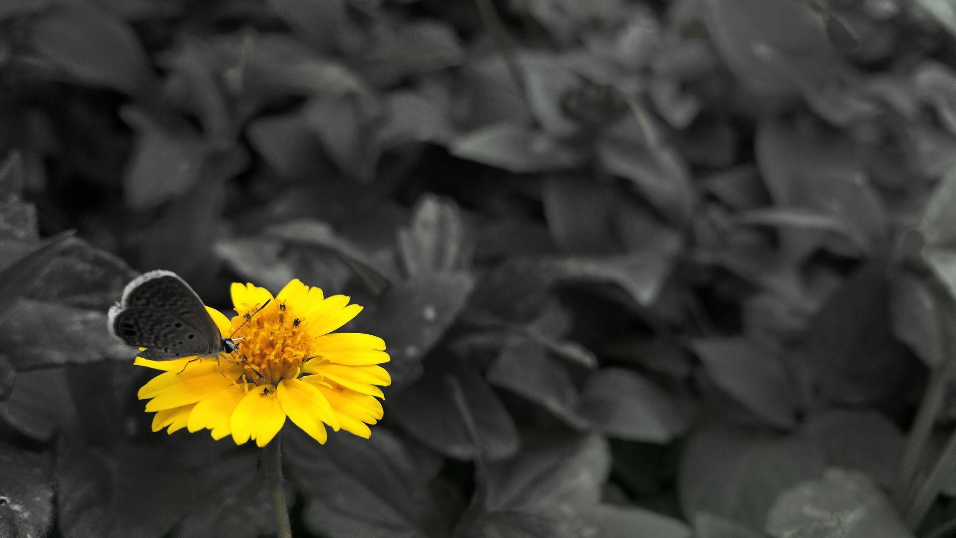 Фото черно-красной бабочки бесплатно
