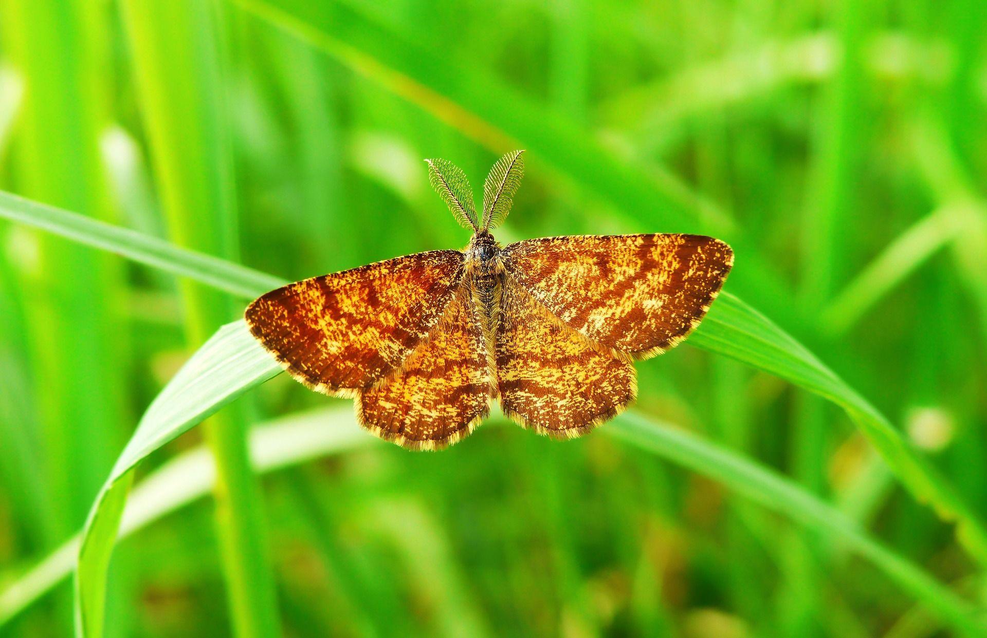 Скачать фото ночной бабочки в России