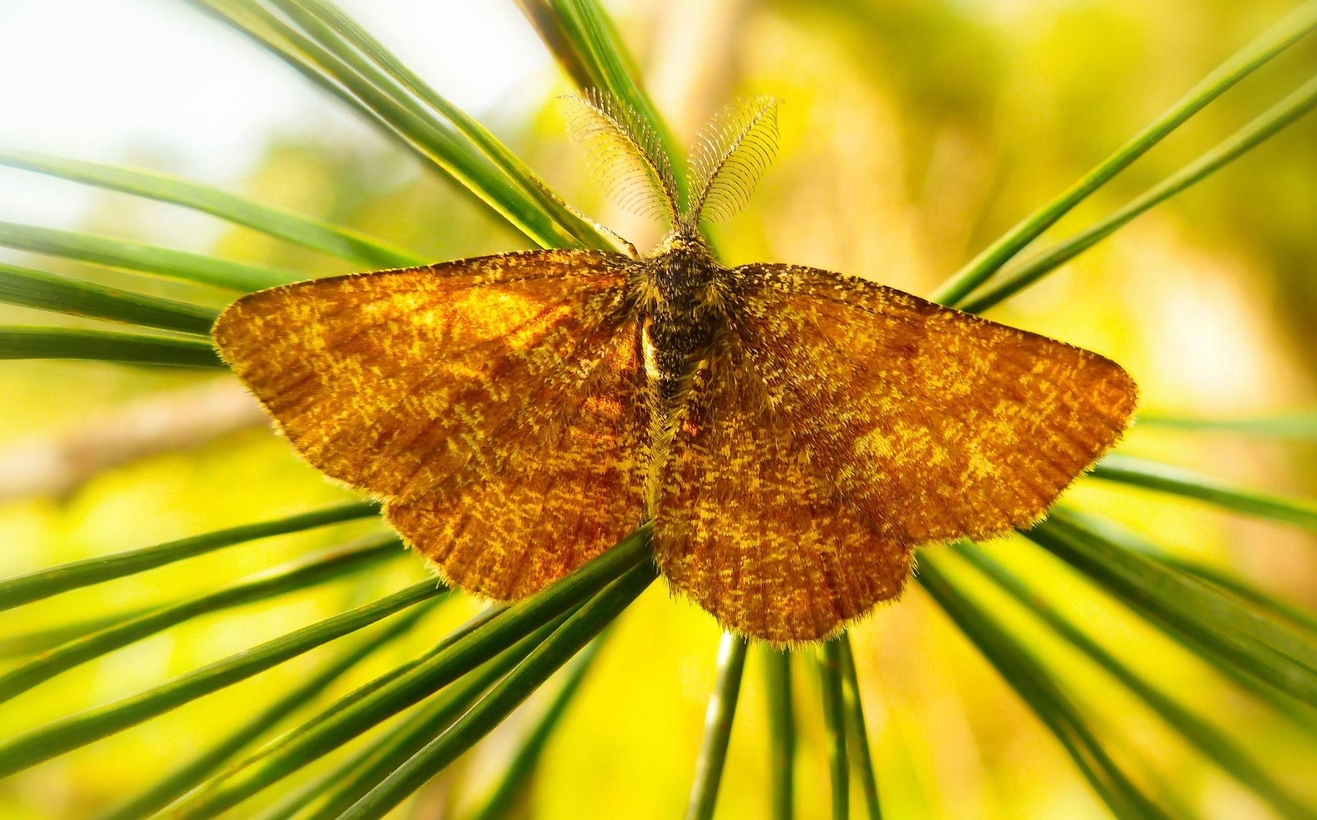 Фото ночного мотылька – бабочки