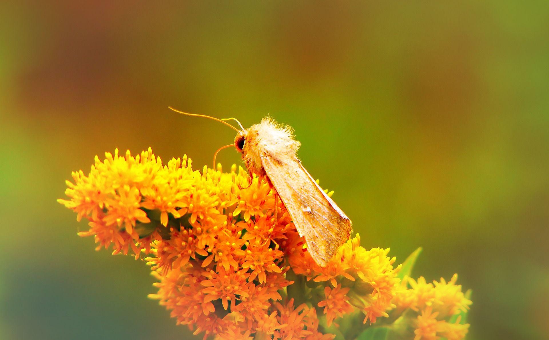 Скачать фото насекомого – ночной бабочки
