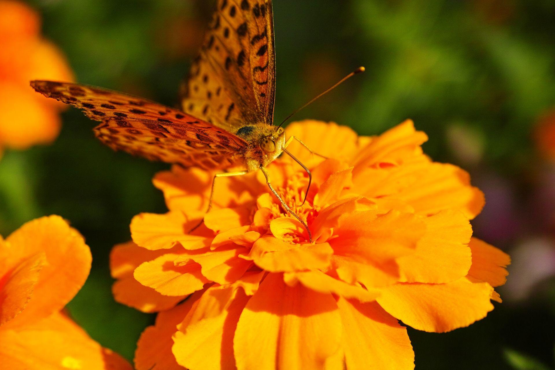 Фото большой ночной бабочки