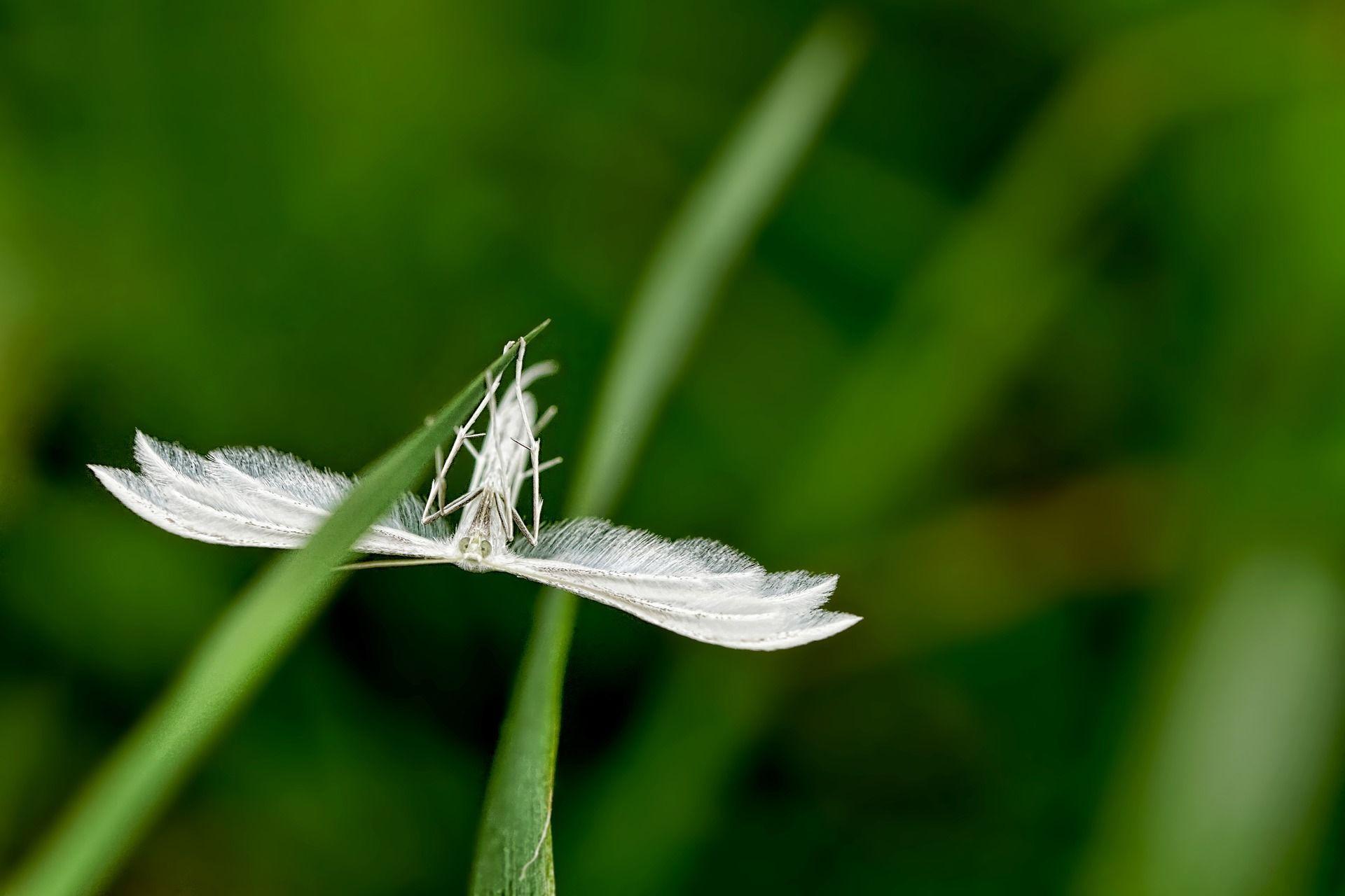 Фото американской белой бабочки