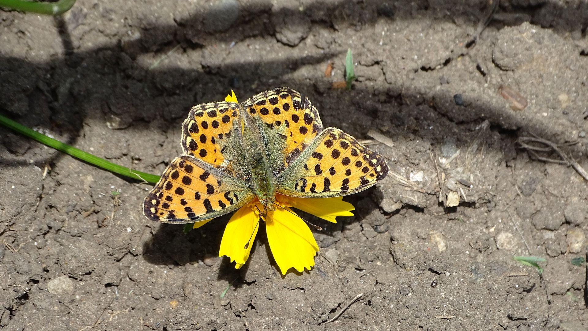 Бесплатное фото бабочки крапивницы в хорошем разрешении