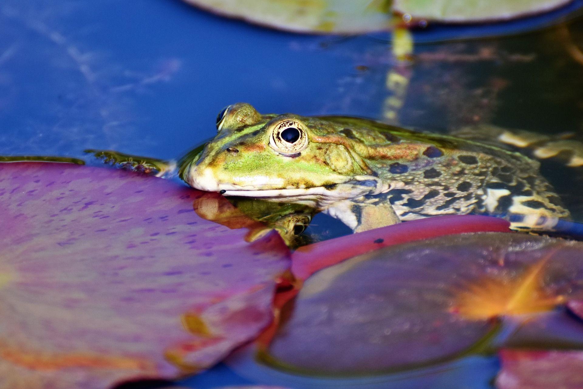 Смотреть бесплатно интересную картинку про жабу на природе