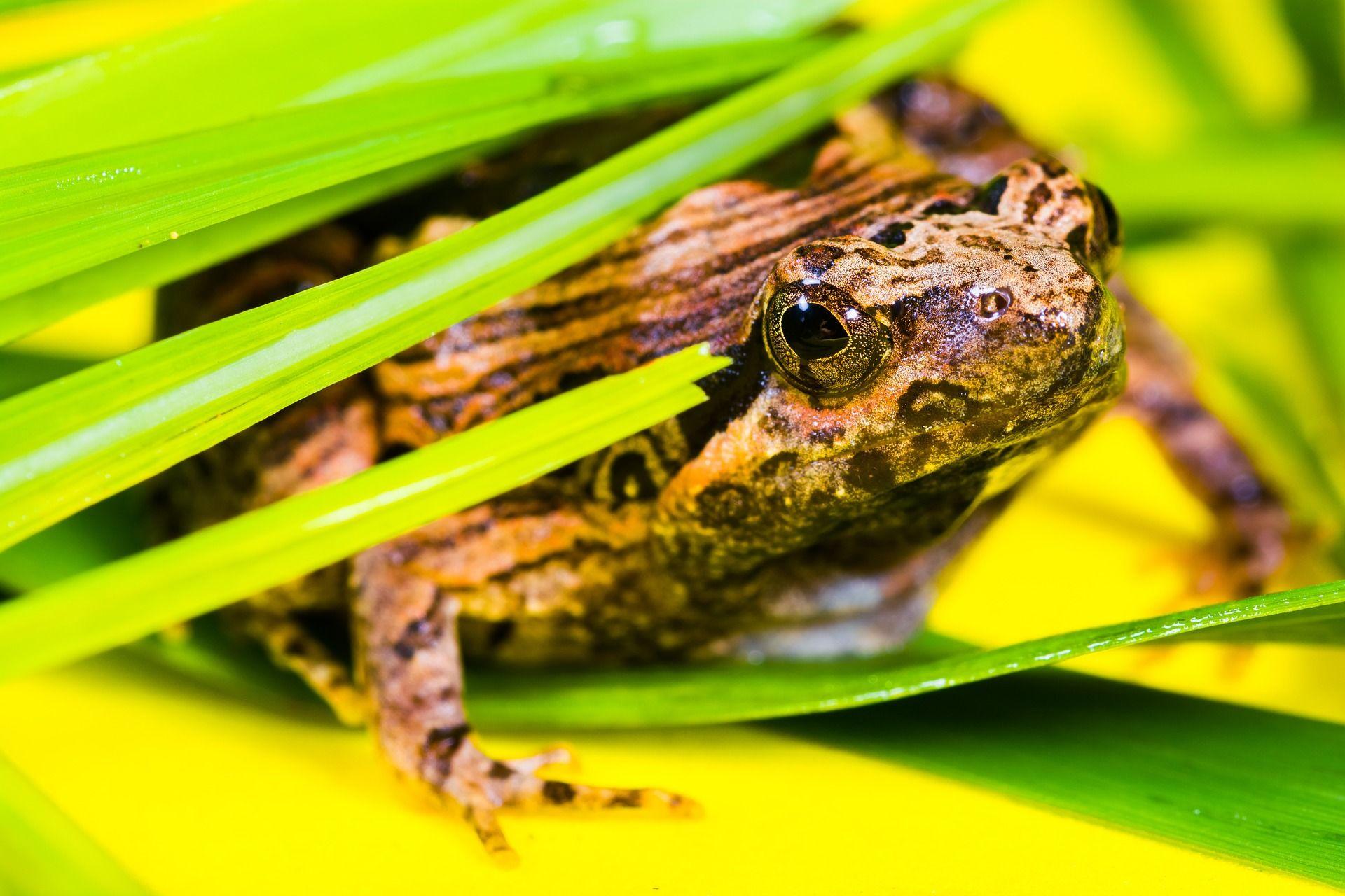Скачать бесплатно лучшее фото жабы в хорошем качестве
