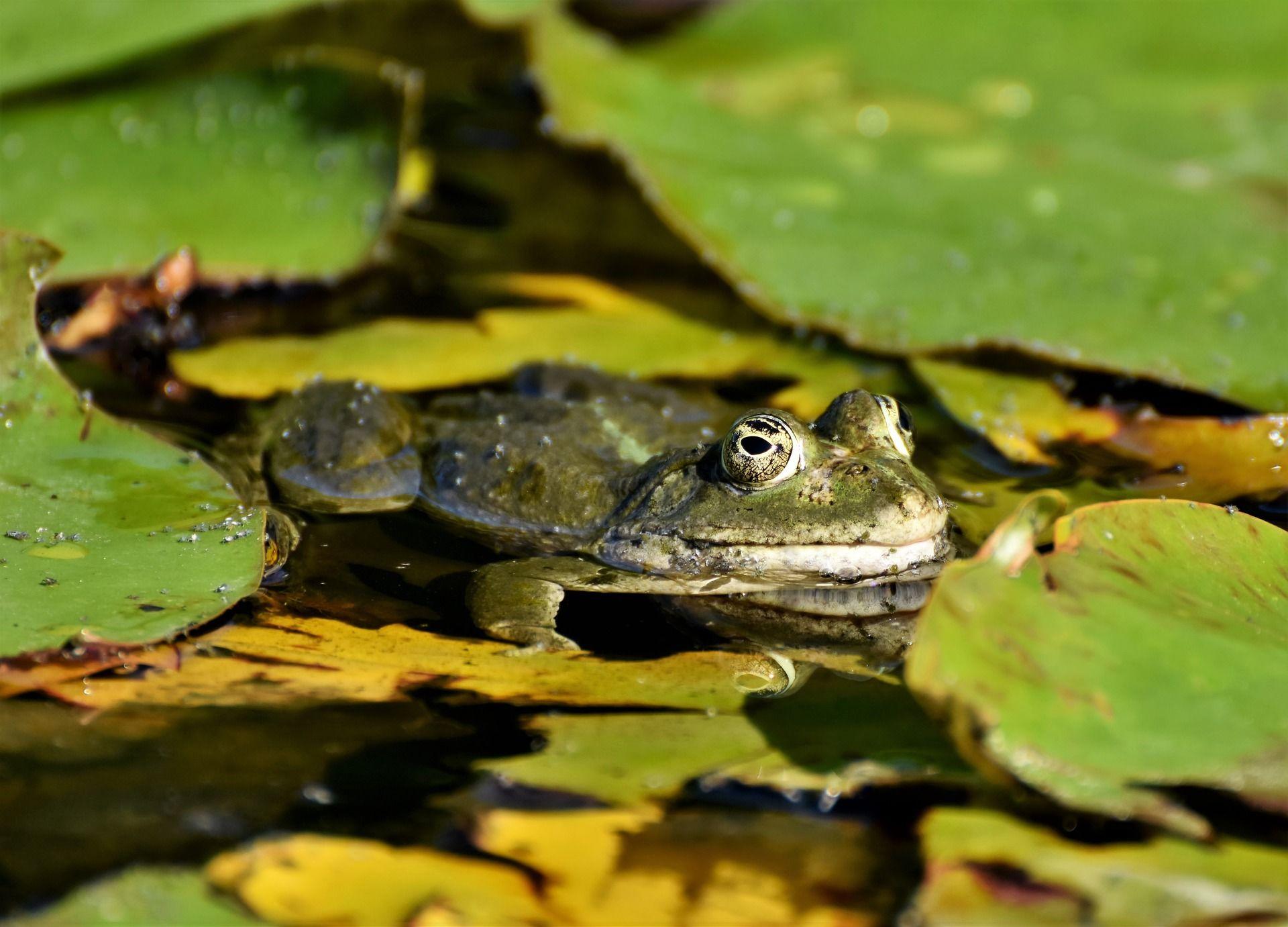 Скачать бесплатно фото красивой жабы на природе