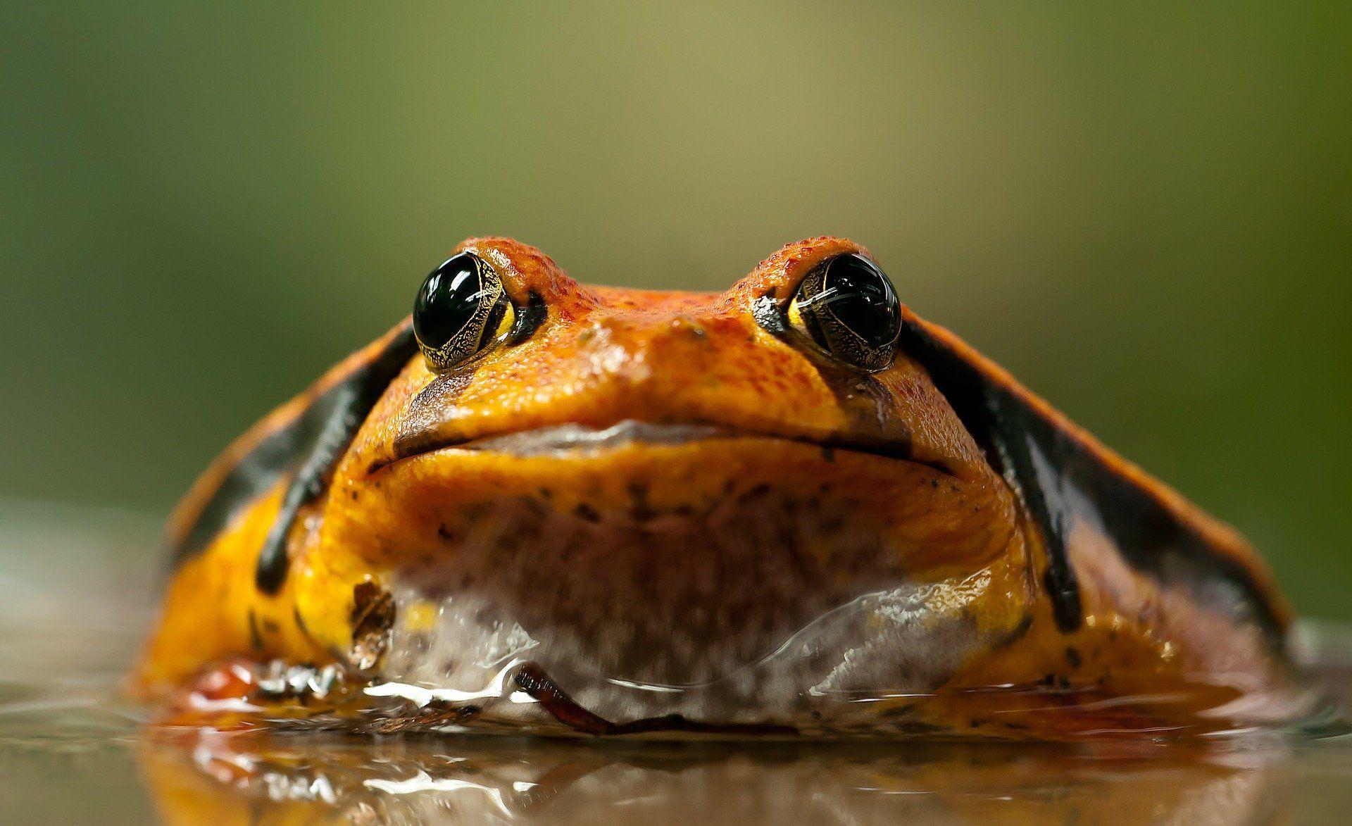 Скачать бесплатно необычную картинку красивой жабы