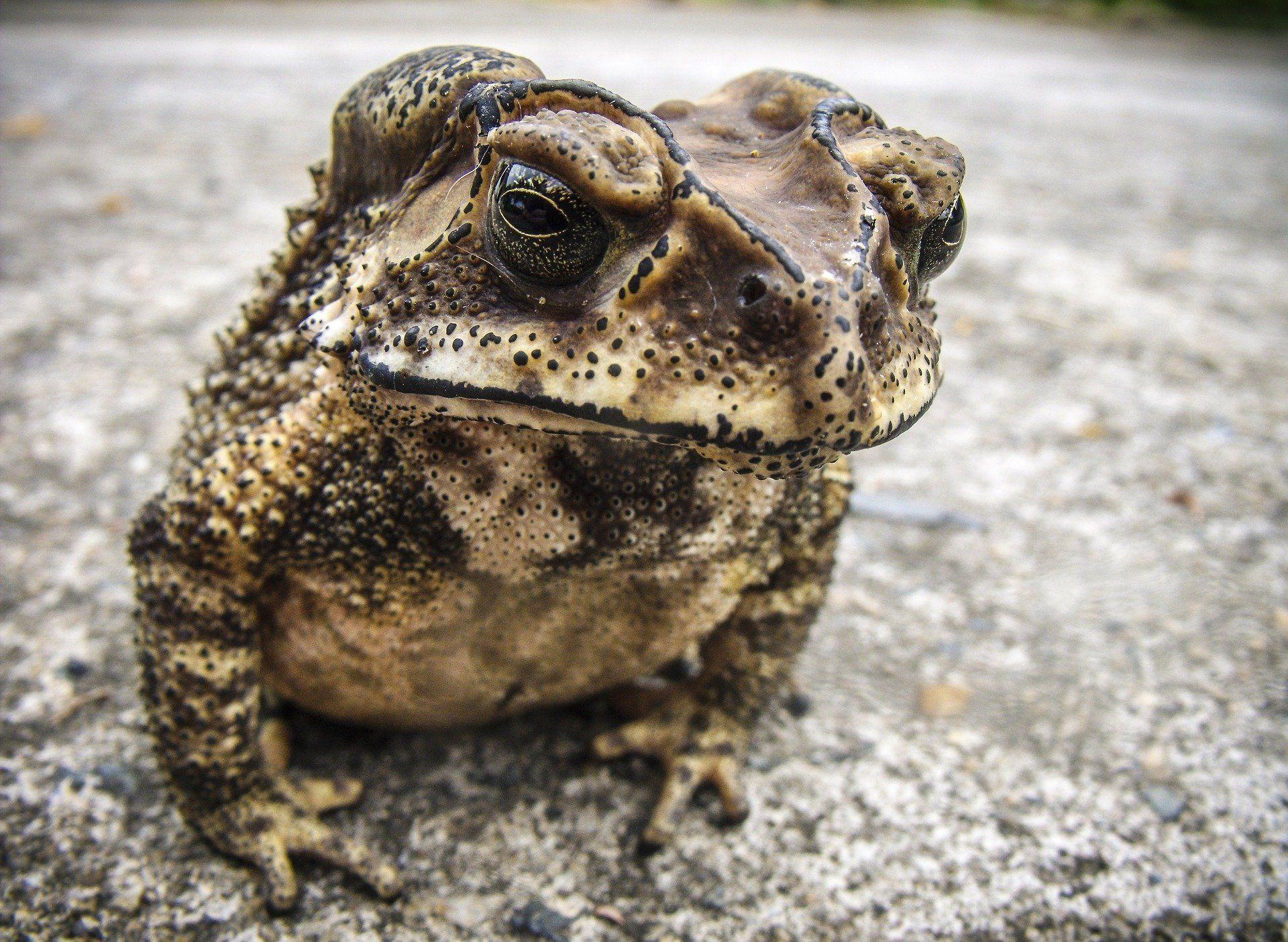 Смотреть онлайн бесплатно красивую картинку жаба на природе